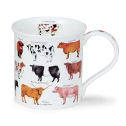 Animal Breeds by Bute | Cow