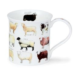 Animal Breeds by Bute | Sheep