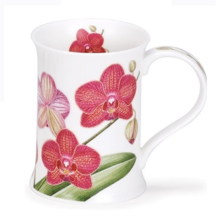 Orchidaceae by Cotswold | Dunkles Pink