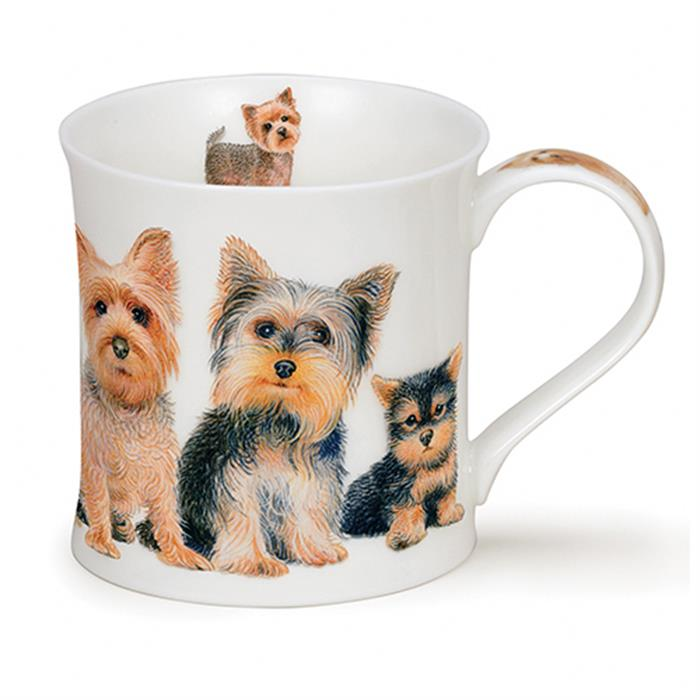Designer Dogs by Wessex | Yorkshire Terrier